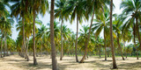 Coconut Palm trees on sandy beach - 176258357