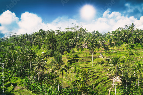 Foto op Aluminium Rijstvelden Aerial view of Tegalalang Rice Terrace at sunny day in Ubud, Bali, Indonesia.