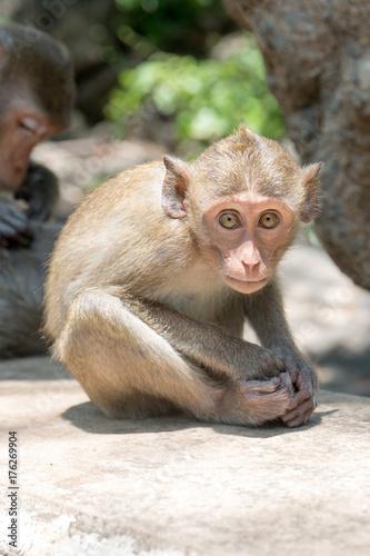 Fotobehang Aap Monkey at Khao Luang Cave Thailand