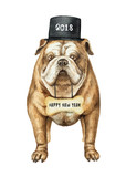 Watercolor vector English bulldog with black cylinder hat isolated on white background. - 176272743