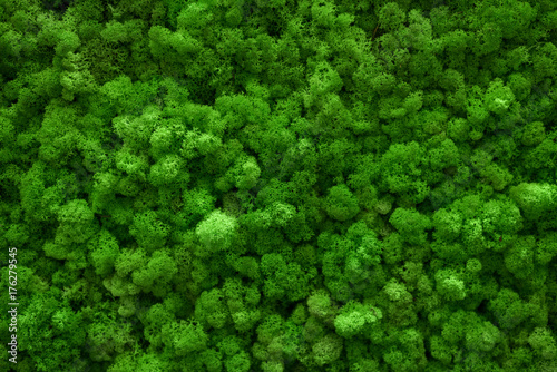 Green moss covered the ground. Nature background concept. Flat lay, top view.