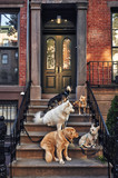 dogs sitting on a stoop. - 176284728