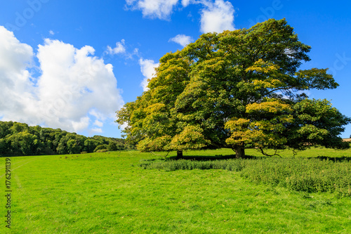 Foto op Canvas Pistache Trees in the Countryside