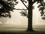 Foggy morning in park with green grass - 176291976