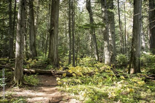 Keuken foto achterwand Weg in bos forêt