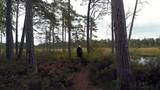 A walk by the lake in Estonia - 176297144