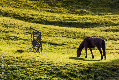 horse grazing on the gassy hillside. lovely scenery on farm outdoor