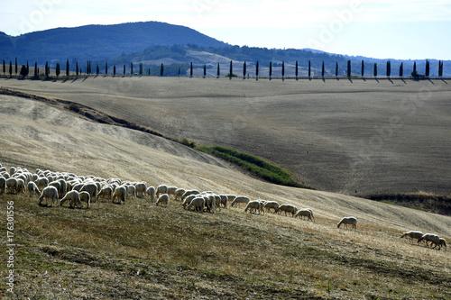 Spoed canvasdoek 2cm dik Toscane Paesaggio toscano - colline di Siena