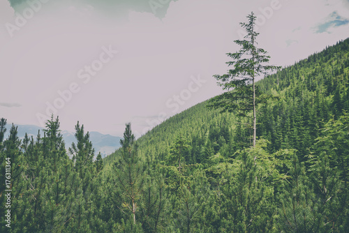 Fotobehang Zomer beautiful forest landscape in the mountains