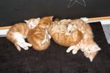 four cute kitten sleeping - 176318578