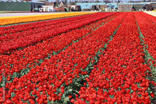 Foto op Canvas Baksteen Netherlands (Holland)