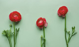Red flowers on green background - 176330375