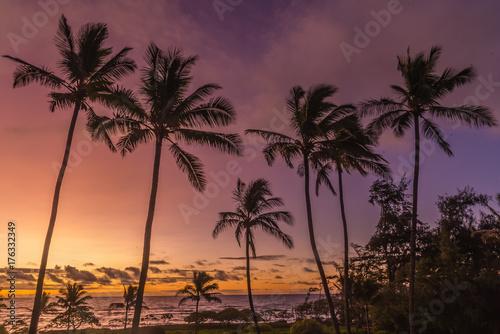Deurstickers Ochtendgloren Sunrise Palm Trees