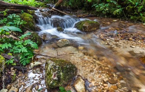 Fotobehang Bergrivier River flowing thru forest, Forest creek flowing thru forrest