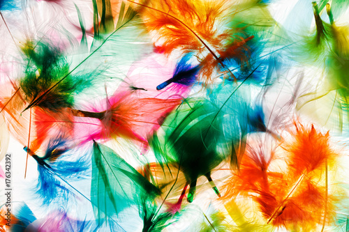 Colorful feathers Poster