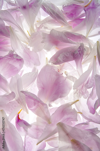 Fridge magnet fondo de pétalos de flor