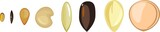 Set of diverse plant seeds on white background - 176351589