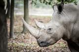 Rhinocéros - 176351976