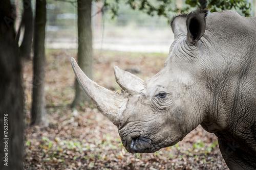 Aluminium Neushoorn Rhinocéros