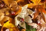 Autumn leaves - 176355515