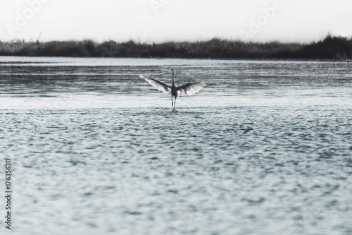 bird walks on the water to take flight in the middle of nature - 176356311