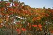 Przyroda w kolorach jesieni, Polska