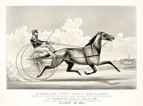 Old illustration of a trotting horse (George Palmer driven by C. Champlin). By Cameron, publ, in New York, ca. 1870 - 176366771