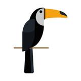 toucan tropical bird icon image vector illustration design  - 176367921