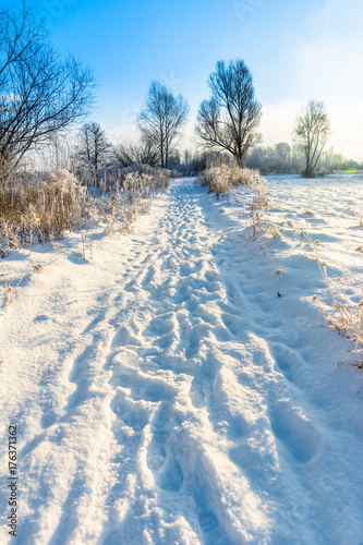 Foto op Plexiglas Blauwe jeans Magical winter landscape with snow in countryside, sun and blue sky, white christmas concept