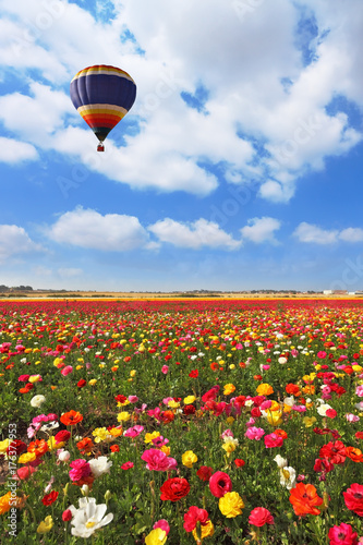 Over the field of flying a balloon