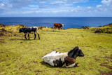 Cows on easter island cliffs - 176378967