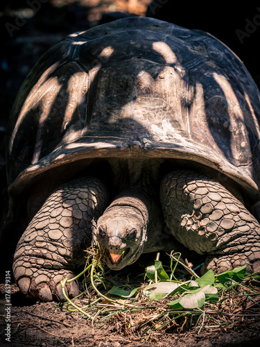 Fotobehang Schildpad Giant Tortoise of Aldabra, La Digue, Seychelles