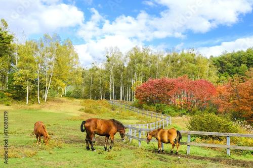 秋の木曽馬牧場 Poster