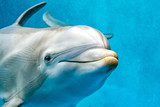 dolphin close up portrait detail while looking at you - 176389721
