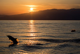 Dolphin silhouette while jumping in the sea at sunset - 176389736
