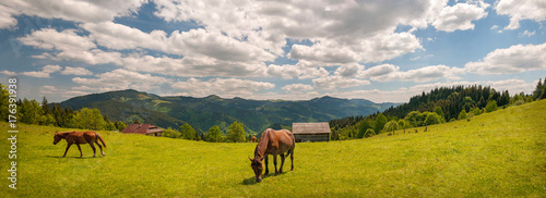 Grazing horse at high-land pasture at Carpathian Mountains in rays of sunset. Panorama of summer pasture on a background of mountains. - 176391938