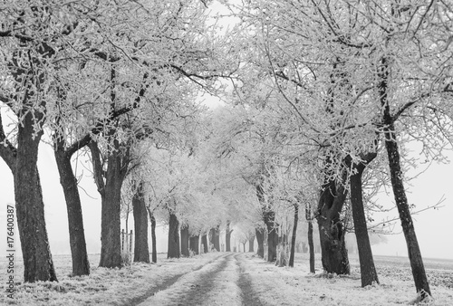 Foto op Plexiglas Bleke violet Winter path with trees horizontal