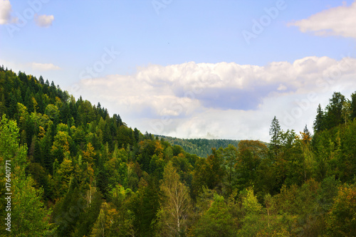 Fotobehang Blauwe hemel spruce forest in the mountainous terrain under the blue sky