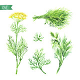 Dill plant, twigs and bunch watercolor illustration - 176405133