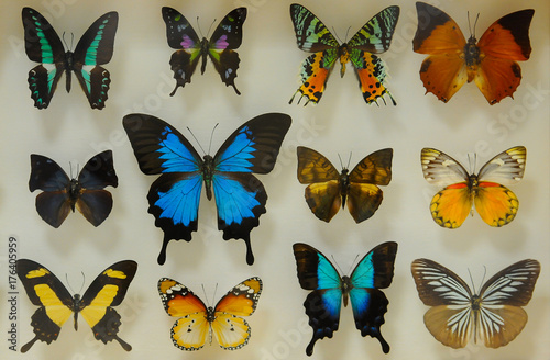 Fotobehang Vlinder colorful and unusual butterfly varieties