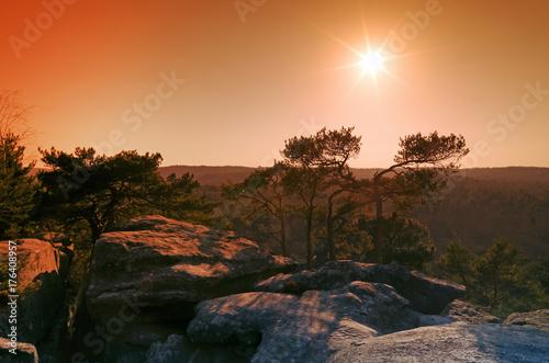 Fotobehang Chocoladebruin Rochers du golfe de Larchant dans le massif forestier de Fontainebleau