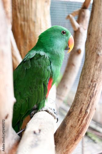Aluminium Papegaai Beautiful green parrot is sticking on branch