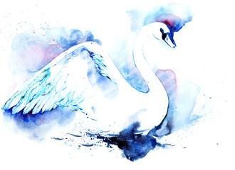 swan © okalinichenko
