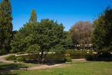 Piccolo laghetto nel giardino di Villa Borghese a Roma - 176420925