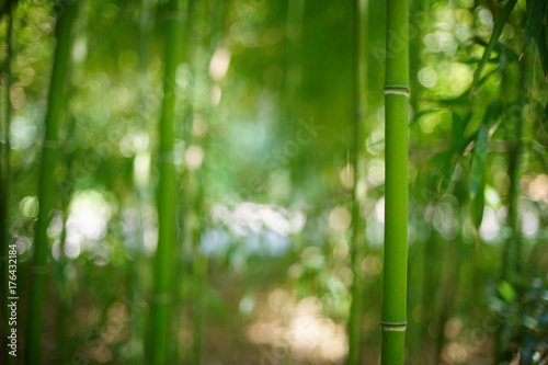 Plexiglas Bamboe Green Bamboo Forest In China