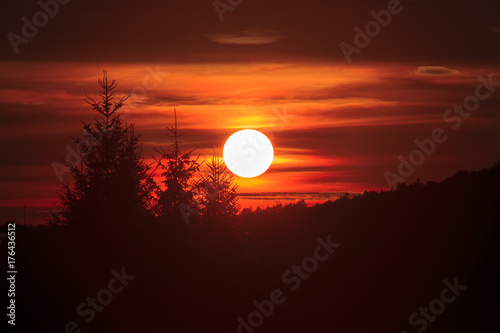 Tuinposter Bruin Forest sunset