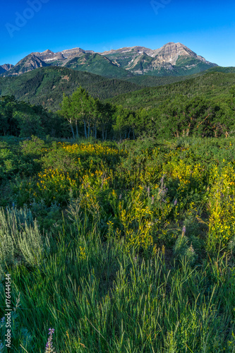 Fotobehang Zomer Wildflowers with Rocky Mountains in background during spring
