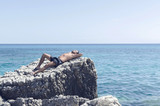 Man enjoying in sunbathing - 176447167