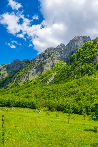 Fotobehang Lente Scenic forest and meadows among the high snow-capped mountains.