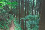 登山道 - 176459195